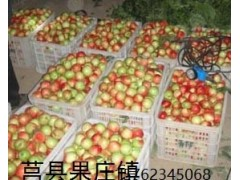 莒县果庄油桃水果-- 莒县果庄果蔬有限公司