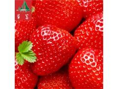 全国供应 四川凉山特产 新鲜现摘草莓   特级水果   鲜美多汁  大凉山水果欢迎洽谈!-- 会理县阿杰路商贸有限责任公司