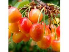 批发给种类型水果-- 深圳市小卡蒙日用品有限公司