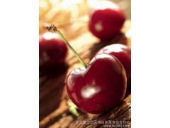 团购代发1000克装 鲜樱桃水果-- 泰安市岱岳区鸿运板栗专业合作社