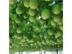 新鲜百香果/西番莲 孕妇水果 10斤装大果-- 安徽农歌农业开发有限公司