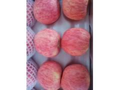 农邦果园休闲水果-- 陕西农邦信息技术有限公司