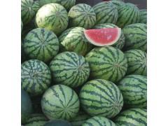 重庆西瓜供应  精品水果-- 重庆市万州区清脆香水果种植园