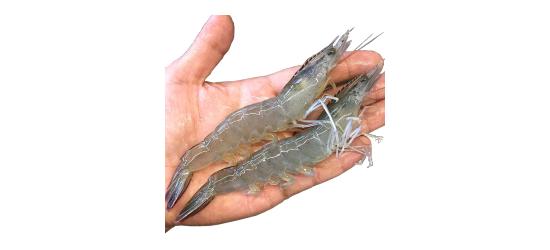海参礼盒 精品礼盒 虾米 紫菜 腌制品批发招商