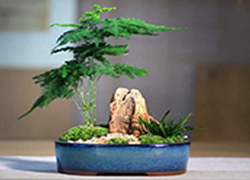 吉林吉林创意绿植