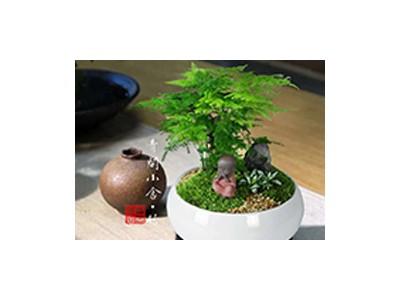 创意绿植-- 安徽花好月明园艺有限公司