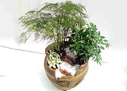 上海上海高档绿植