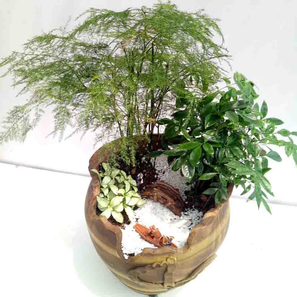高档绿植5
