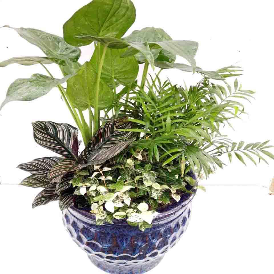 高档绿植3 (2)