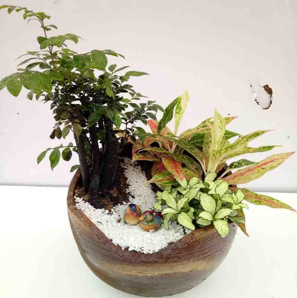 高档绿植3 (1)