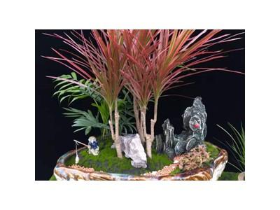 盆景-- 安徽花好月明园艺有限公司
