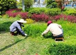 香港香港绿化养护
