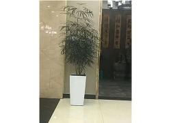 香港香港大型植物