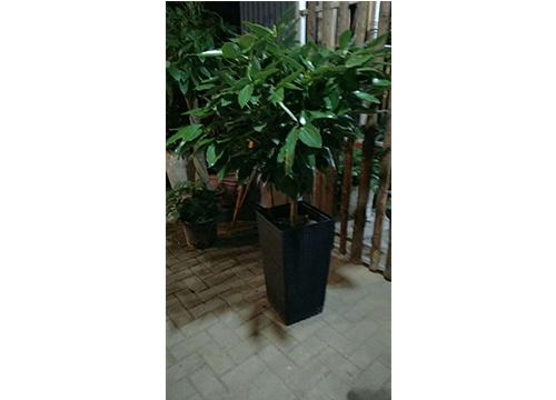 平安树-(2)