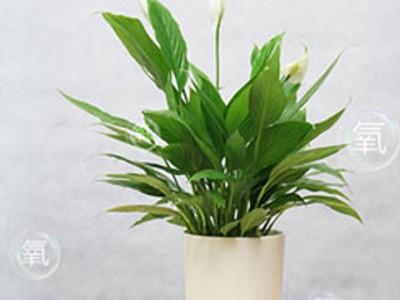 绿植销售-- 小米环境工程有限公司