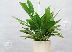香港香港绿植销售