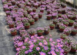 香港香港季小菊
